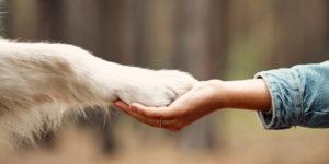 O zvířatech, komunikaci a porozumění